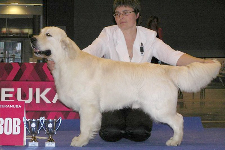father of puppies Ch Ashbury Highlander