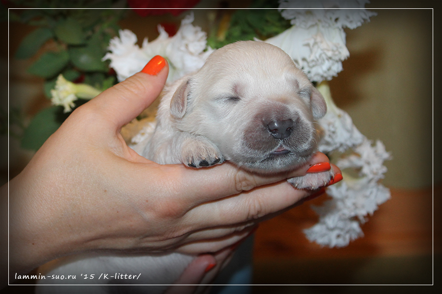 K-Litter, Miss Beige (1 week)